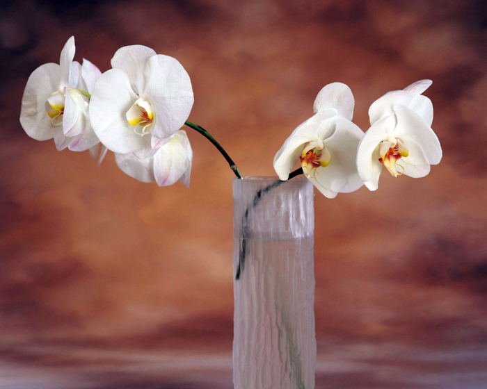 A VASE OF RAREORCHIDS